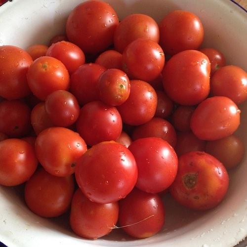 Tomaten für Pesto